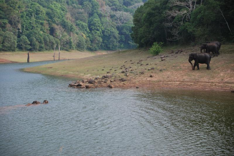 Periyar Wildlife Sanctuary, Kerela