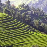 explore-sikkim-darjeeling5